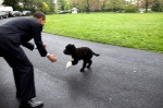 obama-plays-with-family-dog